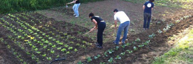 Guerrilla Gardening colpisce ancora!