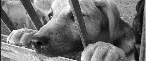 Piano triennale del randagismo: una gestione da cani