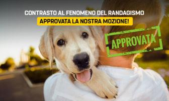 Randagismo, mozione M5S Molise approvata